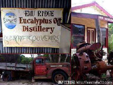鸸鹋岭桉树油作坊(Emu Ridge Eucalyptus Oil Distillery)